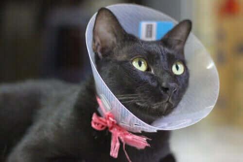 고양이 중성화에 대한 논란