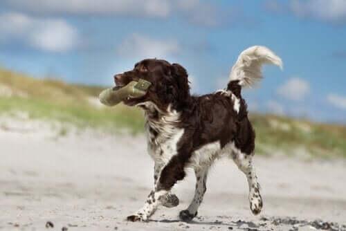 개 행동 상담이 어떻게 개를 도울 수 있을까?