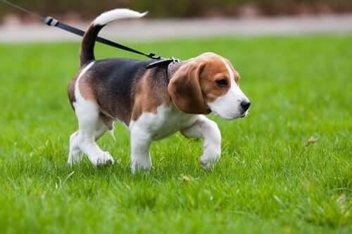개 산책을 할 때 꼭 알아야 하는 지역별 규정