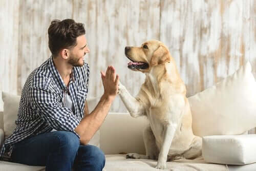 반려견을 위한 개 행동 상담이란 무엇일까?