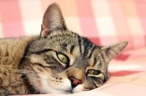 고양이 빈혈의 증상, 원인 및 치료 방법