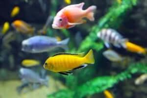 수조에 사는 물고기의 기대수명