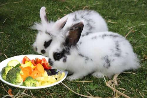 토끼에게3