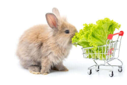 토끼에게2