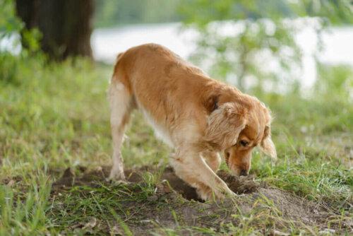 개가 음식을 땅에 묻는 이유