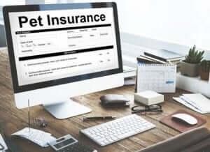 반려견 보험의 법적 책임 및 의료 보장 범위