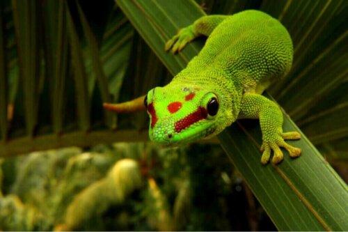 아름다운 낮도마뱀붙이의 특징 및 사육 방법