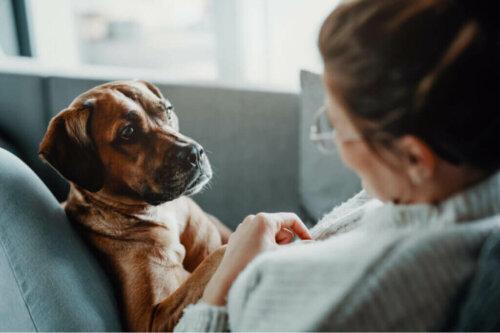 개에게 호흡 곤란을 일으키는 질병