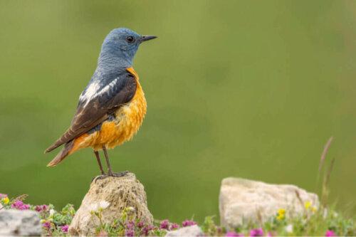 스페인 과다라마 국립공원에 서식하는 다양한 동물