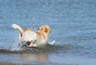 바다에서 개를 구출한 구조 팀