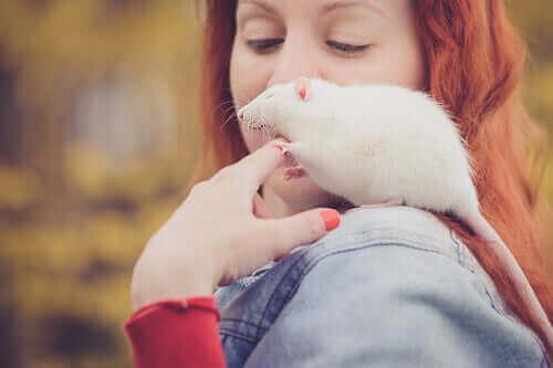 설치류의 일종인 쥐를 반려동물로 키우는 일