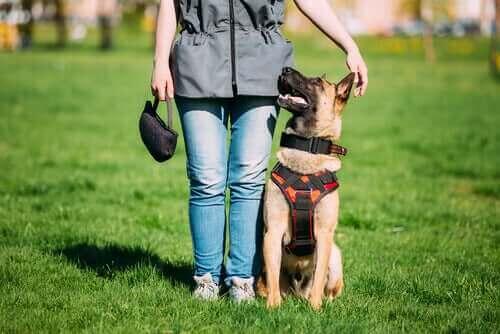 훈련받은 개와 갈등 중재견의 차이점