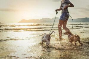 해변에 동물 출입이 허용되는지 확인하자