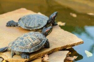 수생 거북을2