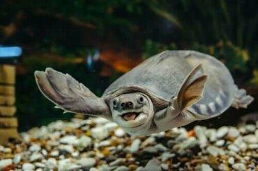 수생 거북을 제대로 돌보는 방법