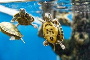 수생 거북을 4