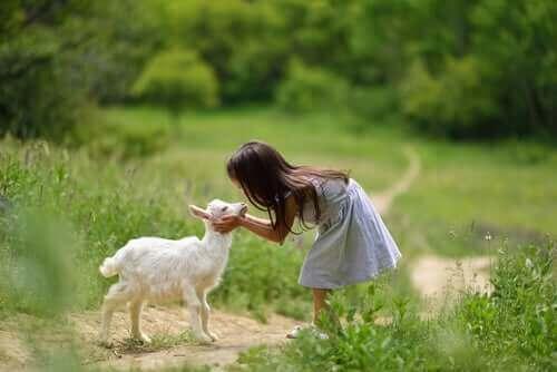 염소를 돌보기 위한 필수 사항 4가지