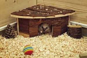 소형 동물을 위한 완벽한 집 만들기