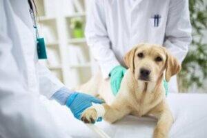 파상풍에 걸린 개에게 나타나는 증상
