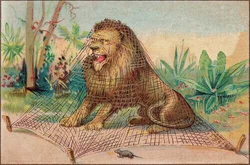 이솝 사자