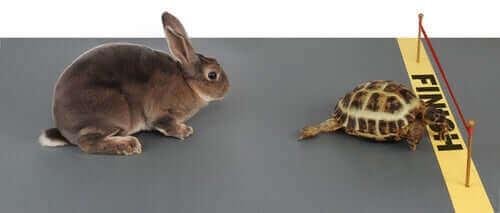 이솝 토끼와 거북이