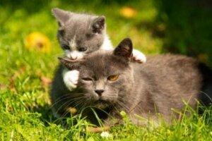 새끼 고양이를 이동시키는 최적의 방법과 시기