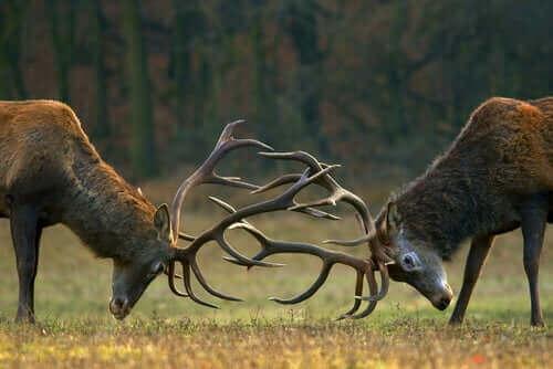 사슴 떼의 식습관과 서식지