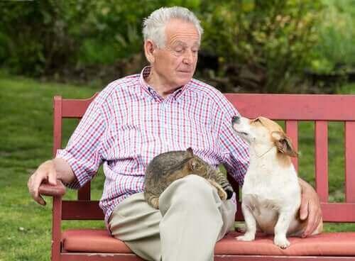 반려동물이 노인