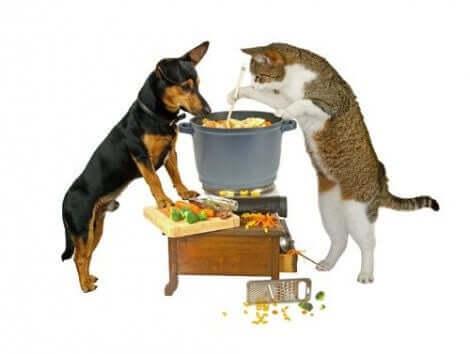고양이와 함께 먹을 수 있는 사람 음식