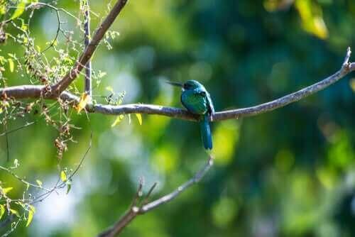 자카마르 새가 가지고 있는 연작류의 특징