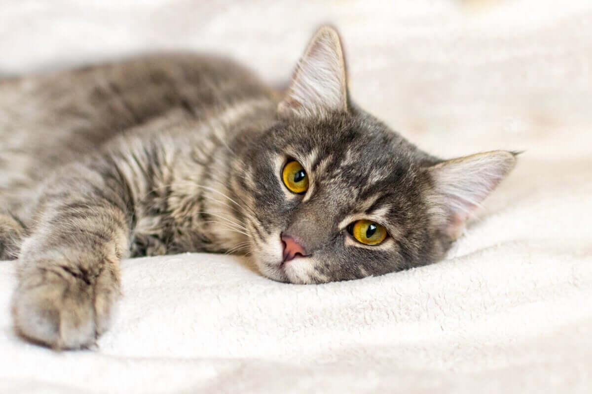 고양이 행동 장애 할퀴기