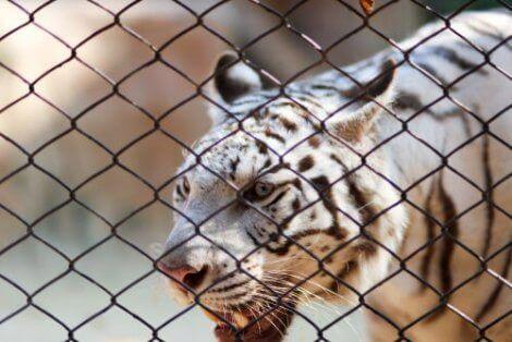 야생 동물 보호법은 무엇일까