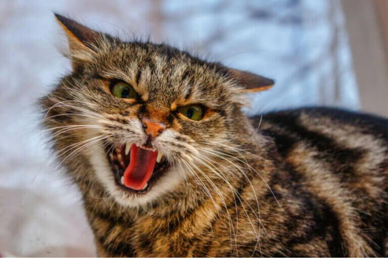 가장 흔히 보이는 고양이의 행동장애 4가지