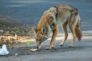 야생동물 보호법은 무엇일까