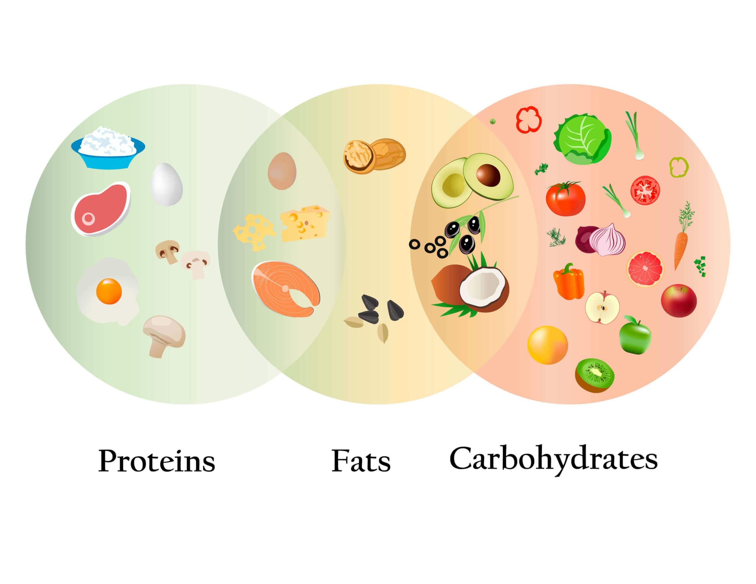 반려견 먹이에 3대 영양소