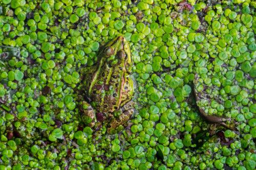 습지가 사라지는 이유와 생태계에 미친 결과