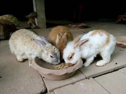 토끼 먹이 급여 시간과 급여량