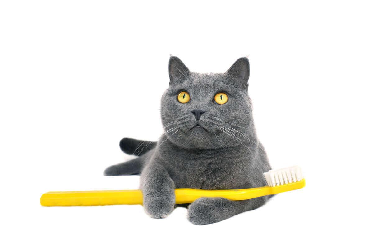 고양이 이빨을 닦는 방법