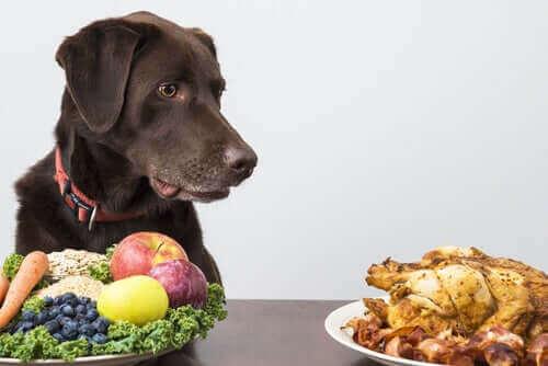 개는 육식일까, 아니면 잡식일까?