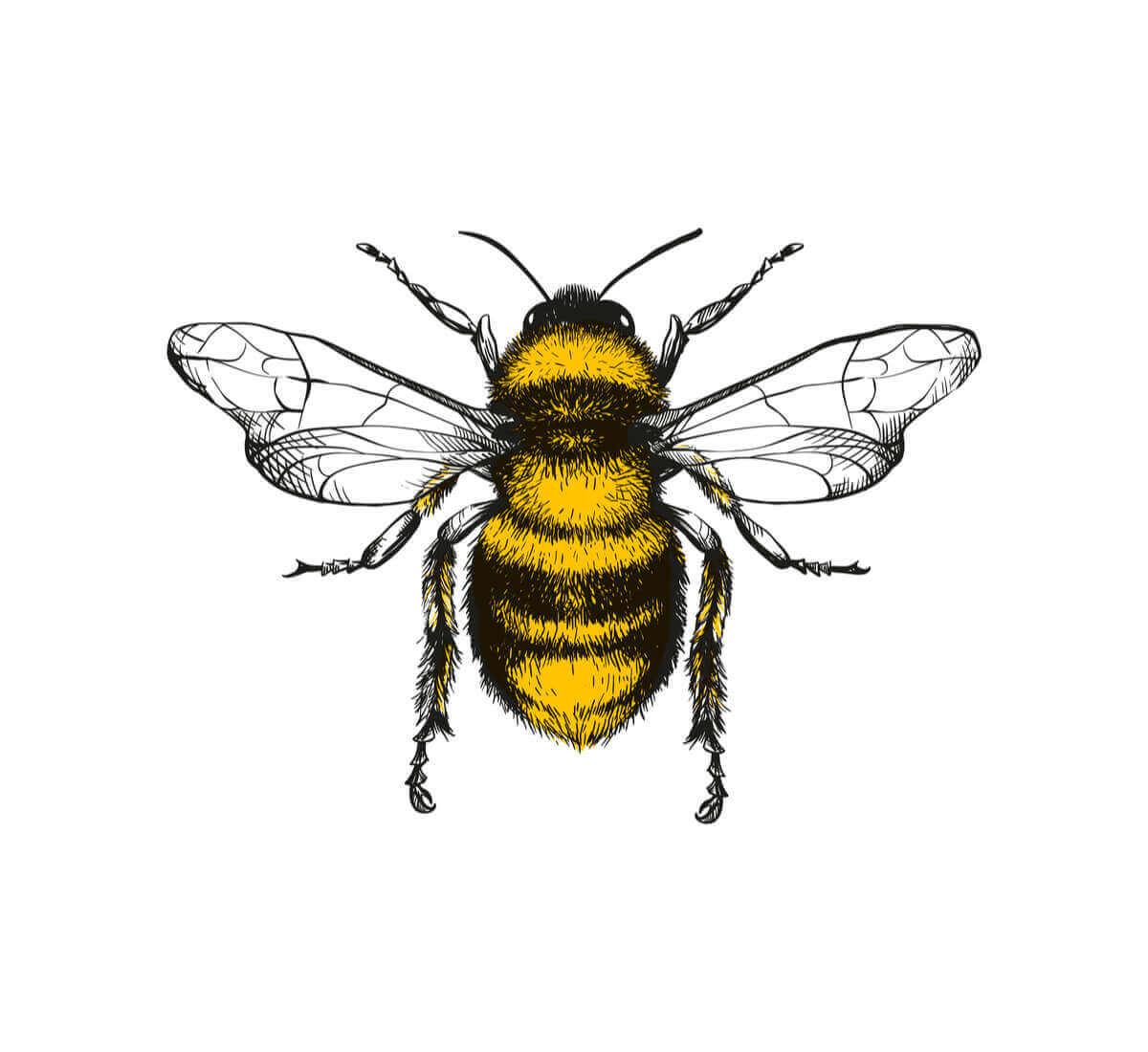 꿀벌의 춤인 8자 춤: 꿀벌의 비밀 언어