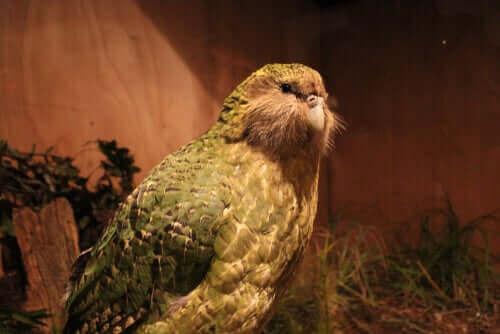 뉴질랜드에서 발견된 거대 앵무새