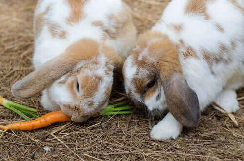 토끼 먹이 종류