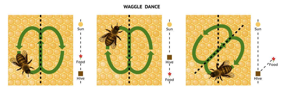우리는 꿀벌과 의사소통할 수 있을까?