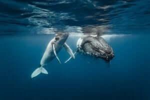 고래의 이동 경로는 270,000년 전과 같다