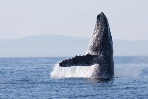 27만 년 전에 시작된 고래의 이동 경로