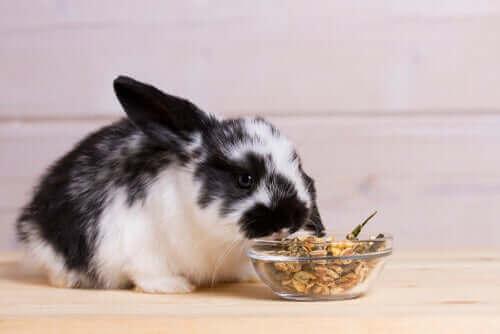 토끼 신선한 채소