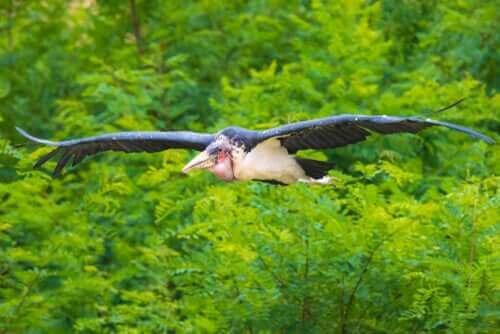 청소가 아프리카대머리황새에게 주는 이점