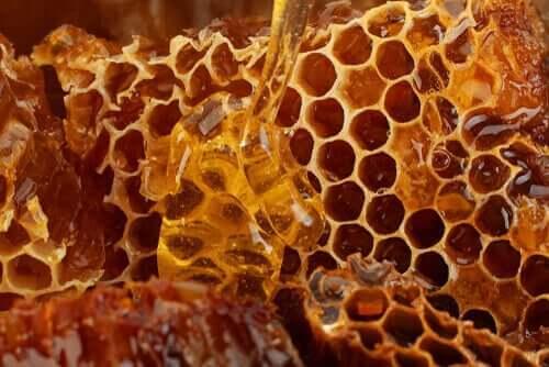 꿀벌 제품과 그것이 반려견의 건강에 주는 이점