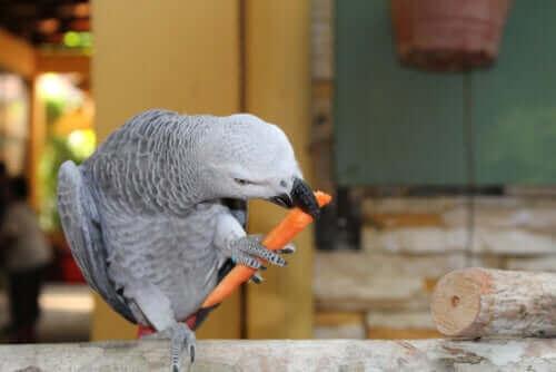앵무새의 식단 - 진짜 음식