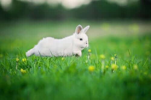 운동은 토끼 비만을 예방할 수 있다